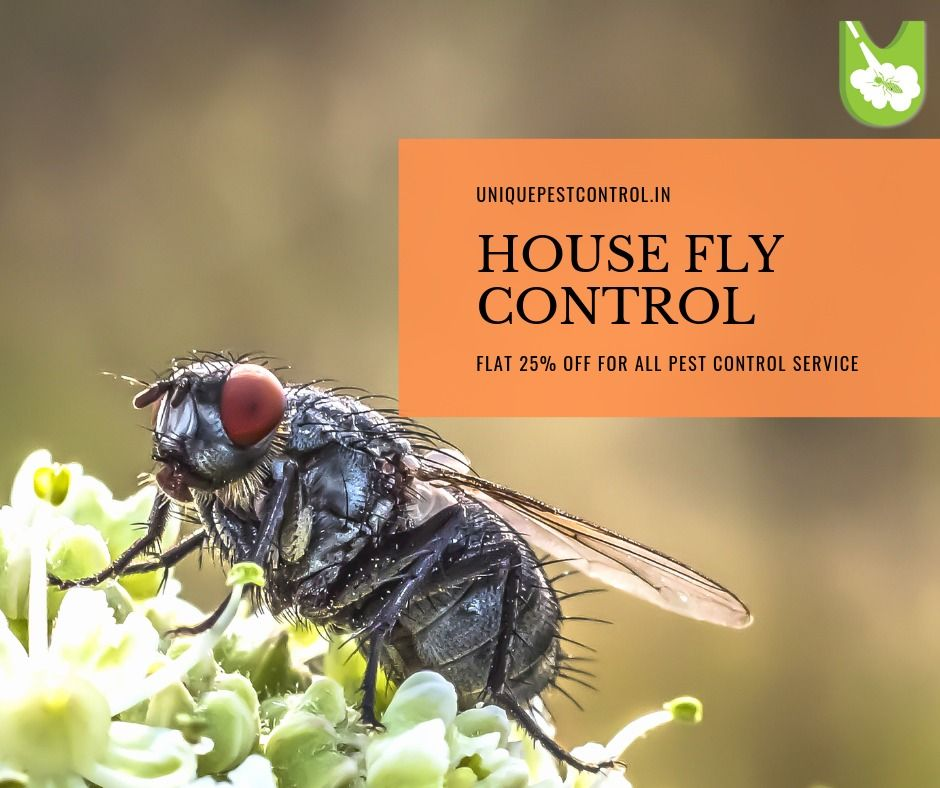 9ed285c732c0a0909d68855794e887fc - How To Get Rid Of House Flies In India