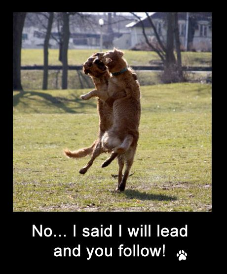 Funny Dog Photos With Captions 2 Dancing Animals Funny Dog