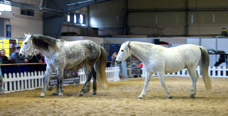 #Cheval #Horse #Pferd #SalonduChevalAlbi