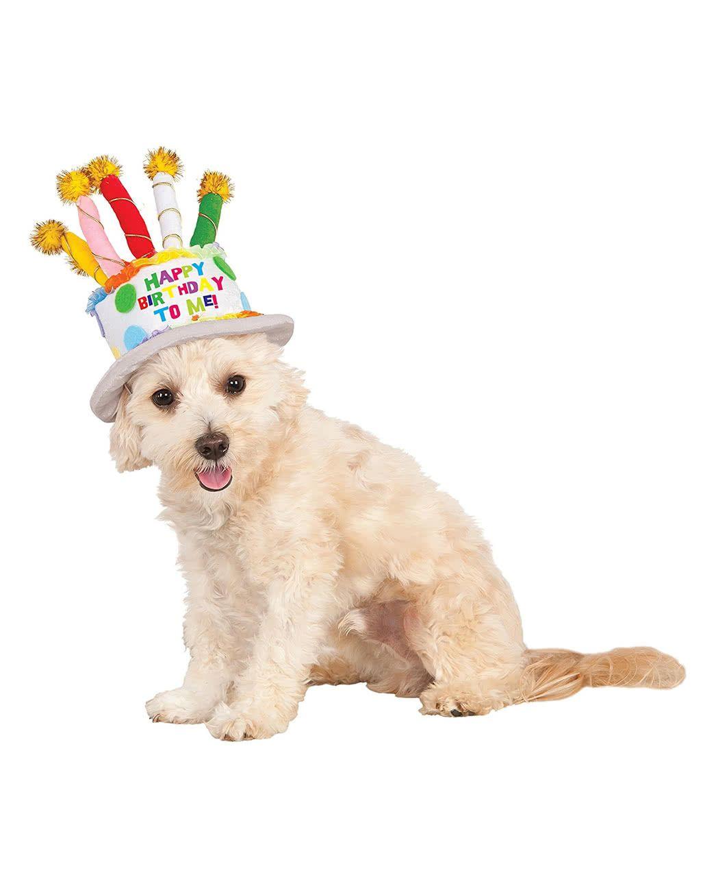 Geburtstagskuchen Hut für Hunde #happyhalloweenschriftzug