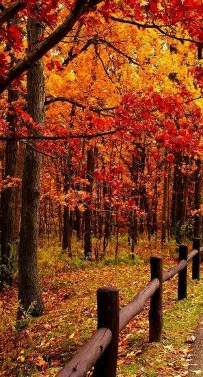 What colors! #autumnscenery