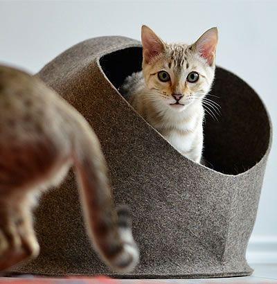 Spielzeug Katze Mit Funktion