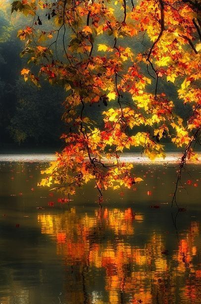 Pinterest The World S Catalog Of Ideas Autumn Scenery Autumn Scenes Fall Pictures