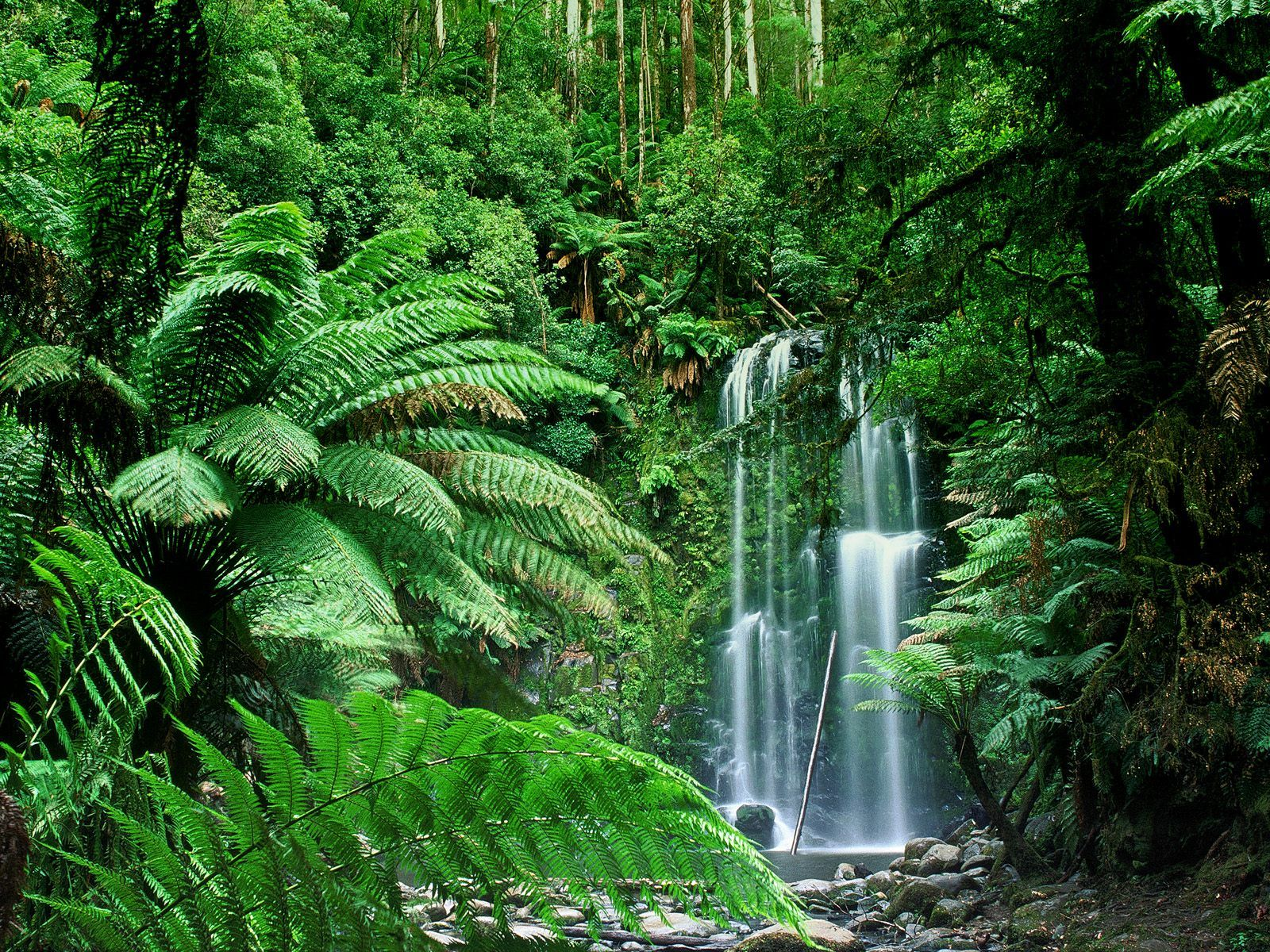 Hillspix Beauchamp Falls Australia The Land Down Under Forest Waterfall Waterfall Wallpaper Tropical Forest