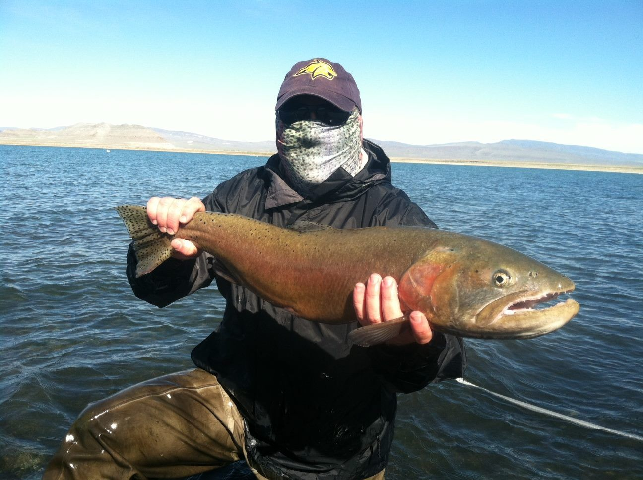 Rob Brushia from Sacramento, California lands a monster Lahontan Cutthroat at Pyramid Lake, Nevada. It was caught on a size 6 popcorn beetle and measured 31 inches.