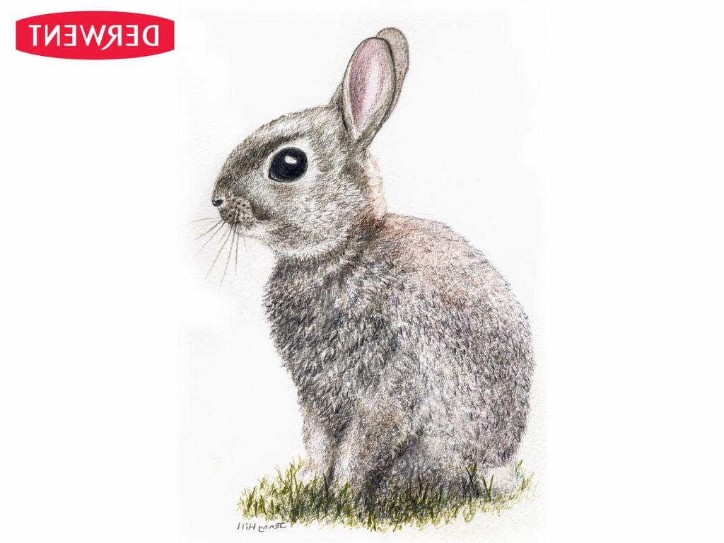 Rabbit Pencil Drawing   Drawings, Pencil drawings, Art gallery