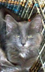Pin On Kitties