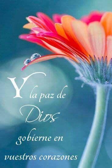 Pin By Ana Rebeca Sanchez On Versiculos Biblicos En Espanol Gerbera Daisy Daisy Image Daisy Wallpaper