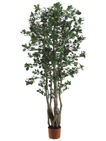 5 Oriental Ficus Tree W 2120 Lvs Berries In Pot Two Tone Green Pack Of 2 To View Further For This Item Visit T Ficus Tree Artificial Trees Decor Ficus