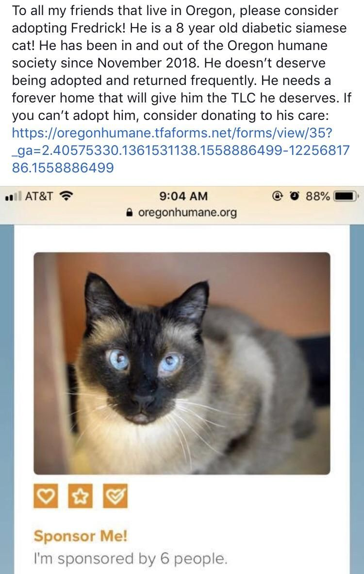 Fredrick 8 year old Siamese cat! Located in Oregon