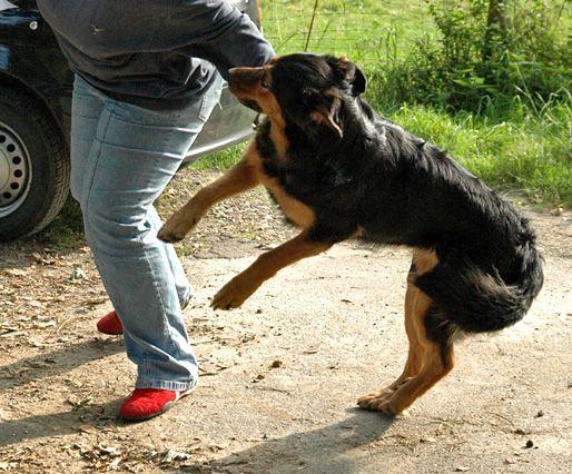 anspringen abgewöhnen Hunde, Hunde welpen, Hundeerziehung
