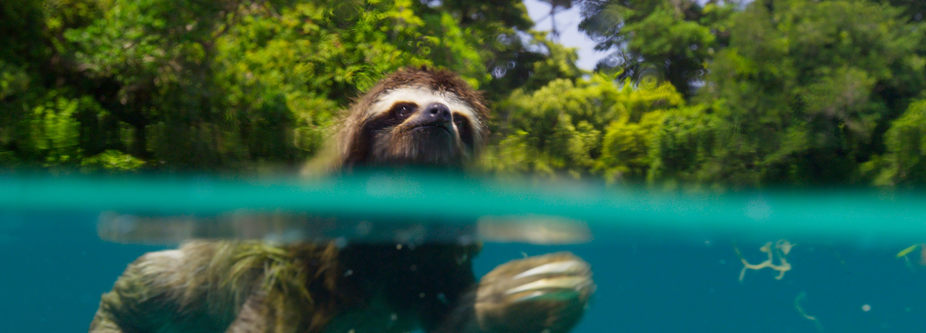 A new study shows watching nature documentaries can make you happier blog for BBC Earth