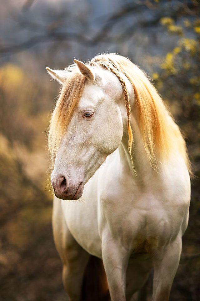 Pferdefotografie Pferde Fotografie Pferdefotografie Pferde Und Hunde