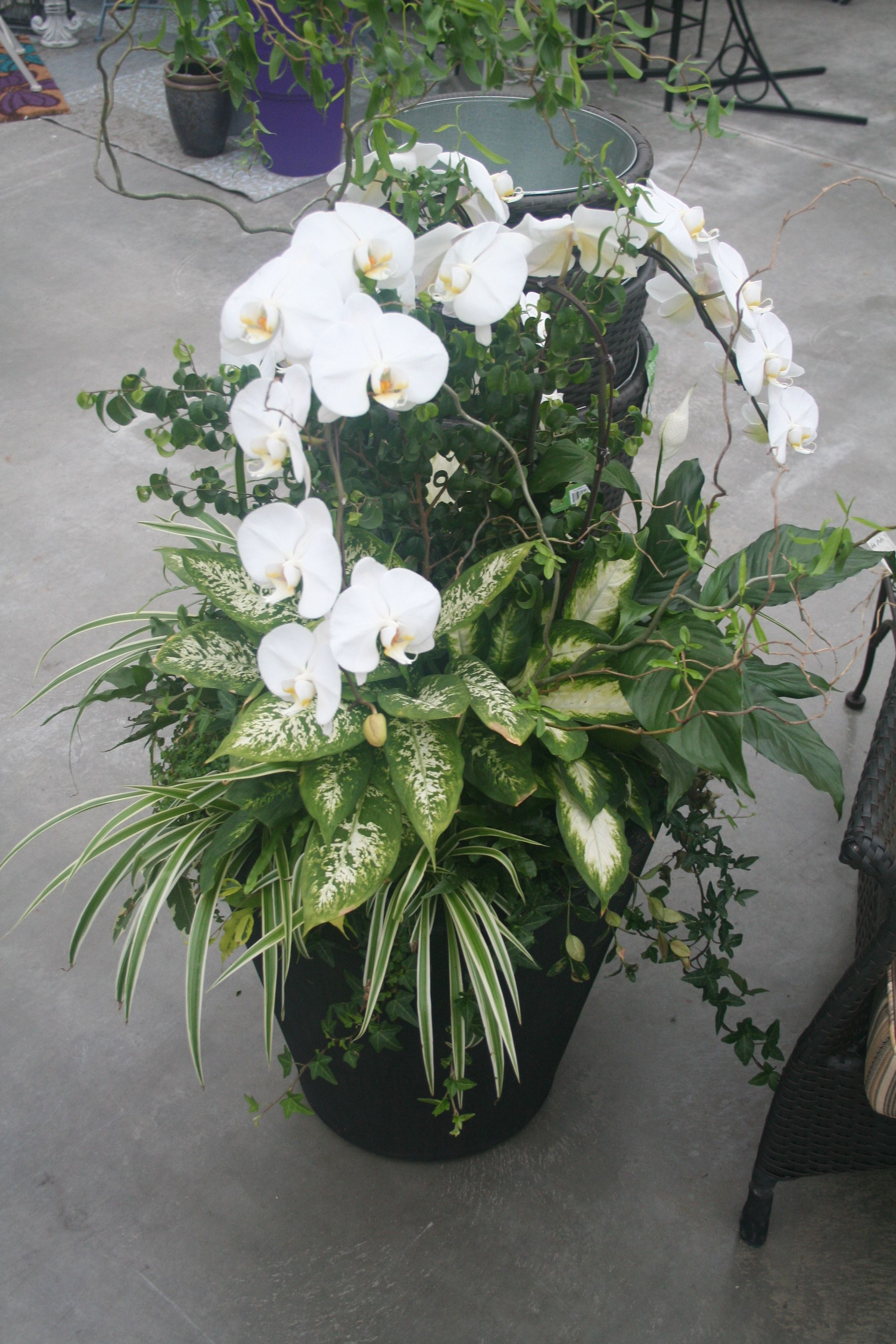 Large Indoor Orchid Planter | Container Gardening | Pinterest ...