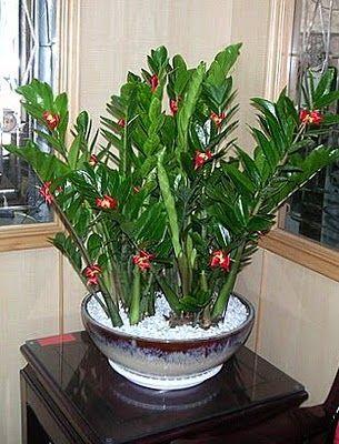 Is The Zz Plant Poisonous Planta Zamioculca Plantas Jardim
