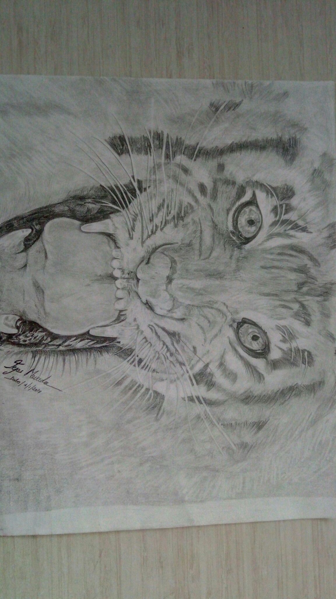 Drawings of lions in pencil dating