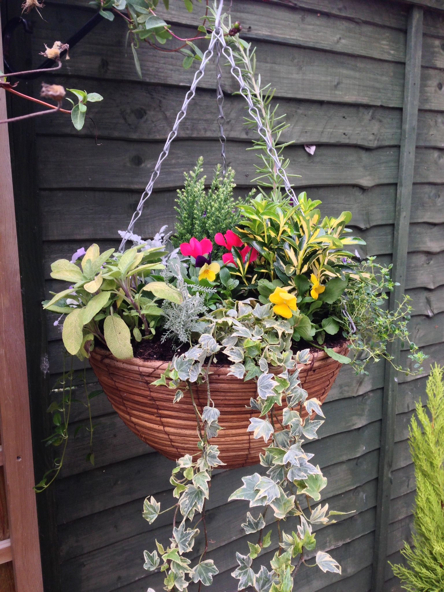 Autumn Winter Hanging Basket Saffron Walden Garden Center Displays Centre Christmas Baskets