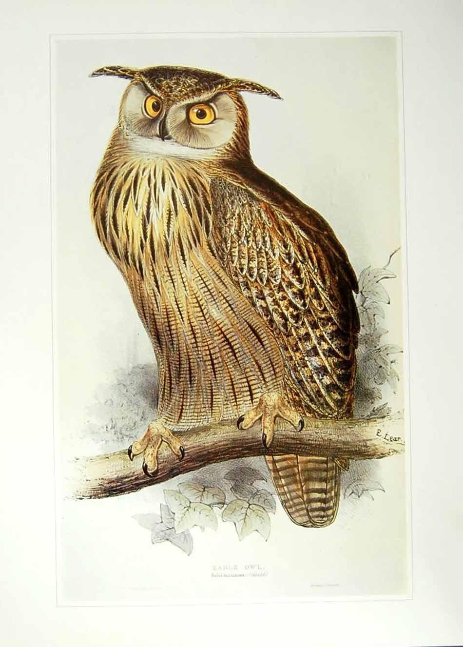 Public Domain Vintage Owl Image 17 Free Vintage Illustrations In 2020 Owl Images Vintage Owl Vintage Illustration