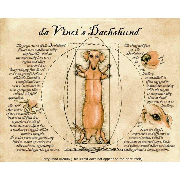 da Vinci's Dachshund Print by faerypond on Etsy