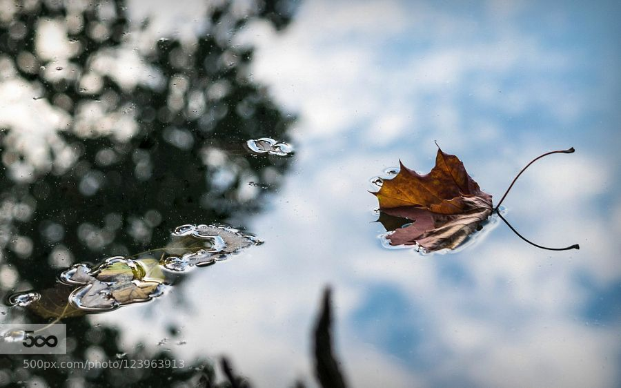 Autumn Blues by NorbertStojke #fadighanemmd