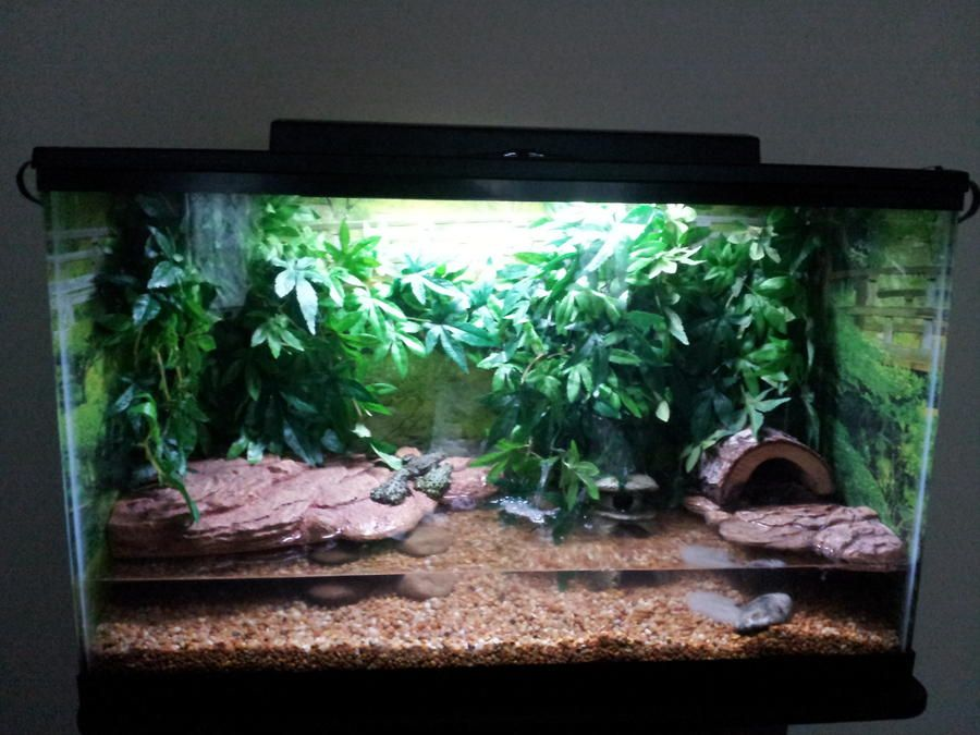 Fire belly newt tank setup google search pet related for Fish tank fireplace