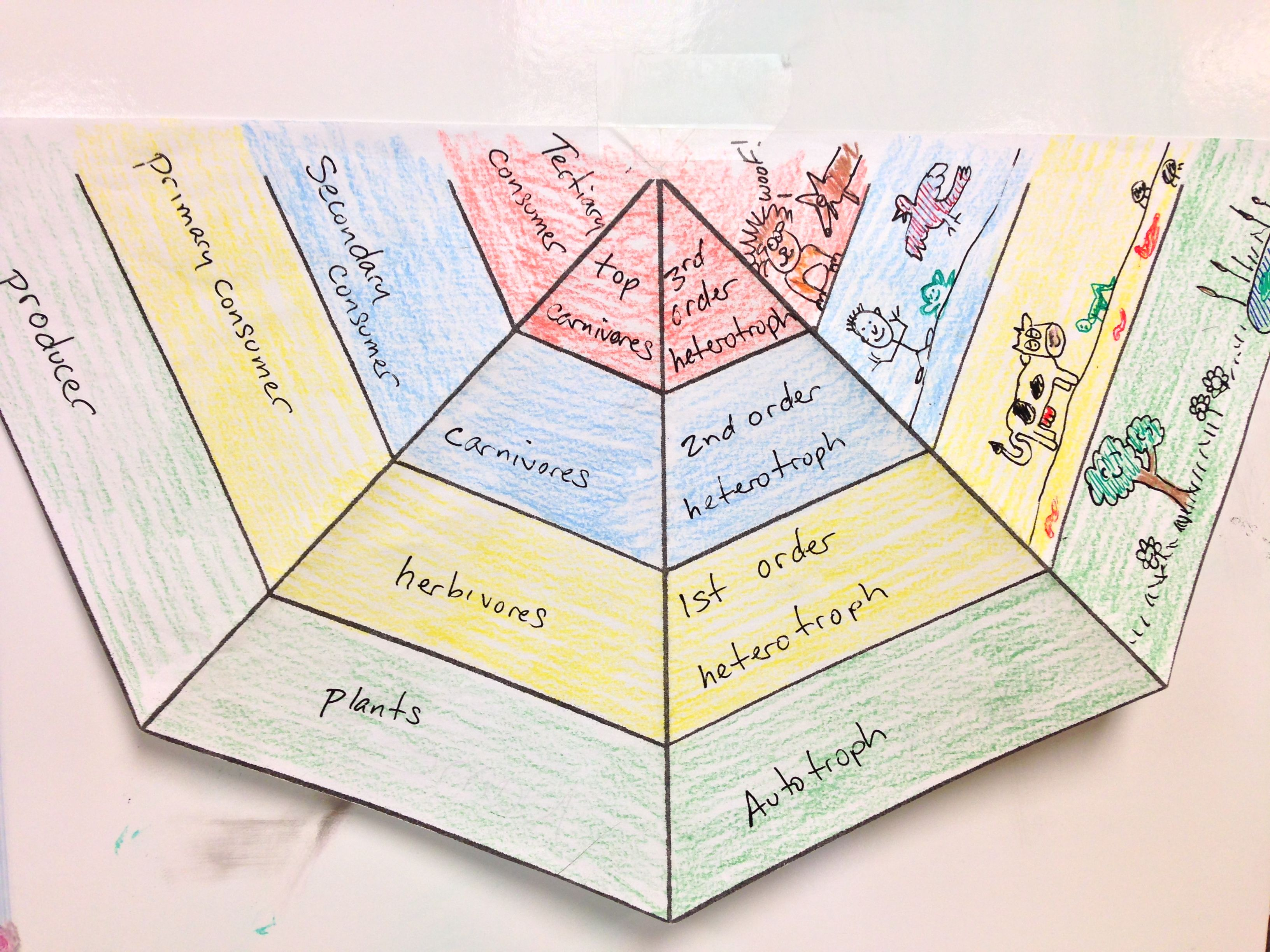 Worksheets Ecological Pyramid Worksheet 1000 ideas about ecological pyramid on pinterest food webs here is a cool multisensory activity idea for learning the energy coloring worksheet
