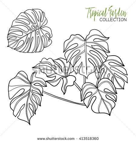 Monstera Tropical Plant Vector Illustration Coloring Book For