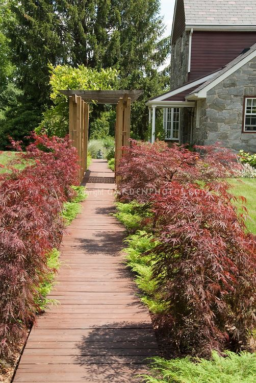 38 Glorious Japanese Garden Ideas: Japanese Maple Trees And Dwarf Evergreens Lining Pathway