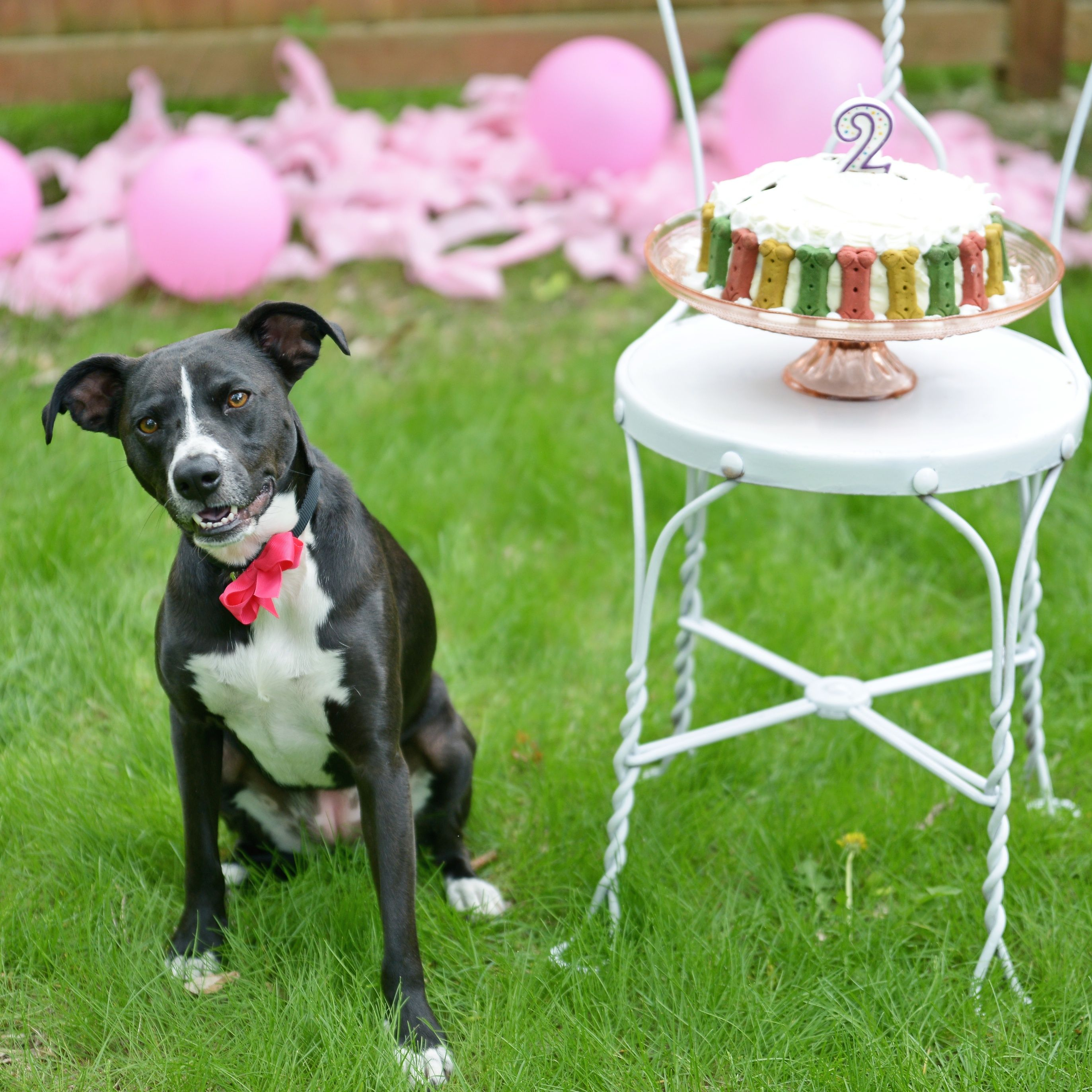 Girl And Dog Birthday Party With Cake Balloons