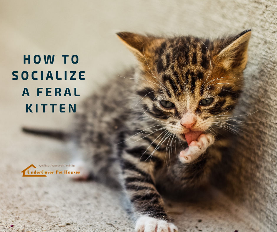 How To Socialize A Feral Kitten Feral Kittens Feral Cat House