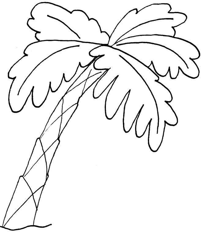 Resultados De Búsqueda Para Dibujos De Palmera Dibujo Para Colorear