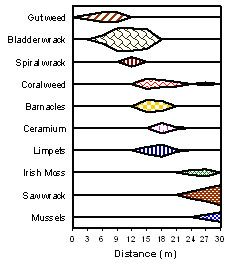 Biology site with software for making all kinds of kite graphs incl biology site with software for making all kinds of kite graphs incl kite ccuart Images