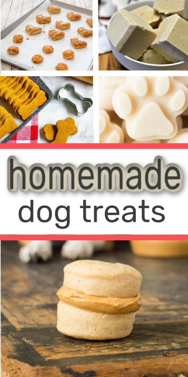Here are 30+ homemade DIY pet foods you can make for your pet that are vet approved. Meaning they have ingredients that are safe for pets to eat. These contain ingredients like bananas, peanut butter, pumpkin, and even bacon. You will love making these and serving them to your pup the next time you're in the kitchen. #dogfood #dog #treats #pet #homemade #diypet #petfood