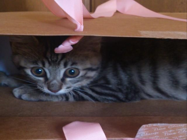 ☆袋に入ってるよ☆ #cat  #ねこ