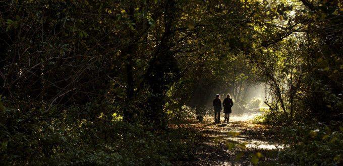 """""""Tú eres una criatura del universo, no menos que los árboles y las estrellas… Conserva la paz con tu alma en la bulliciosa confusión de la vida… Sé alegre. Esfuérzate por ser feliz"""". Compartimos el…"""