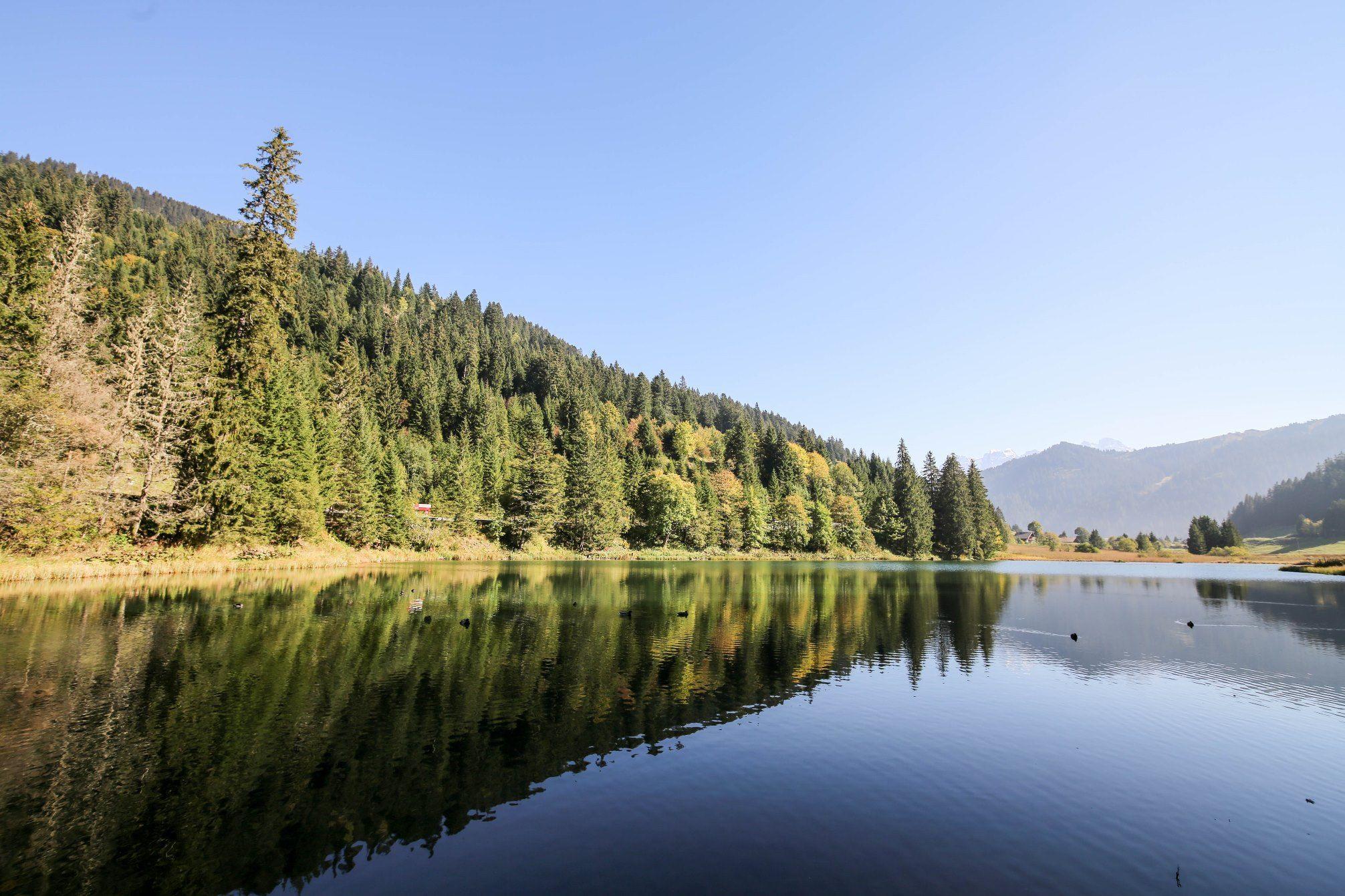 Wanderung, Natur, in Champery im Herbst, Portes du Soleil. Art Boutique Hotel Beau Séjour. Galerie Defago, Lac Vert, Lac de Morgins, Vallon de They.