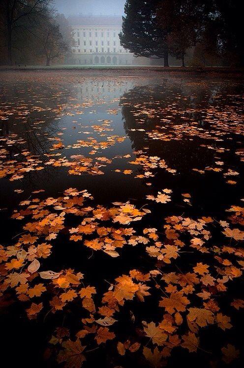 Fall Harvest Wallpaper Hd Rainy And Foggy Autumn Day Lanskap Dan Posting