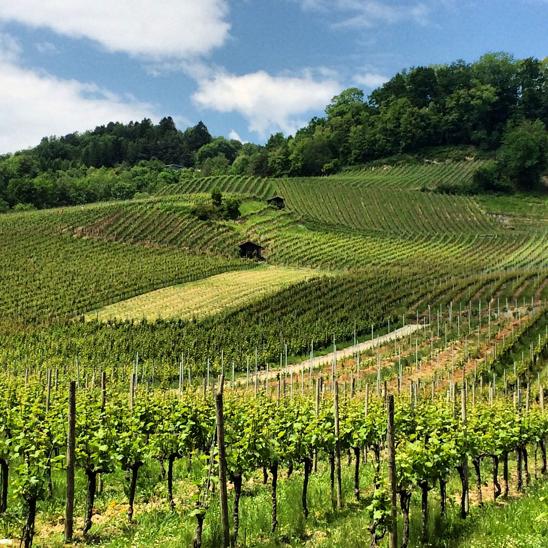 Mont Vully, Fribourg/Vaud, Switzerland