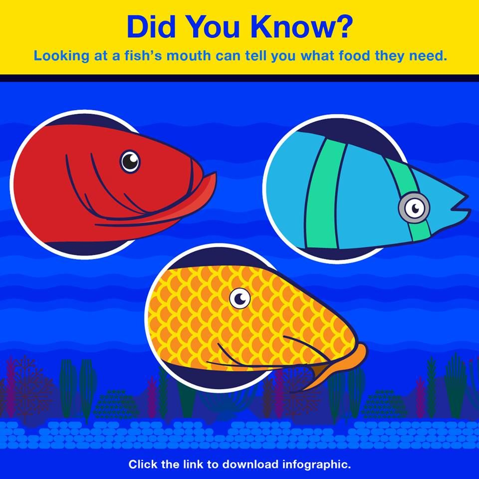 Freshwater aquarium fish ebook free download - 17 Best Images About Tetrafish On Pinterest Fish Aquariums New Twitter And Aquarium Lighting
