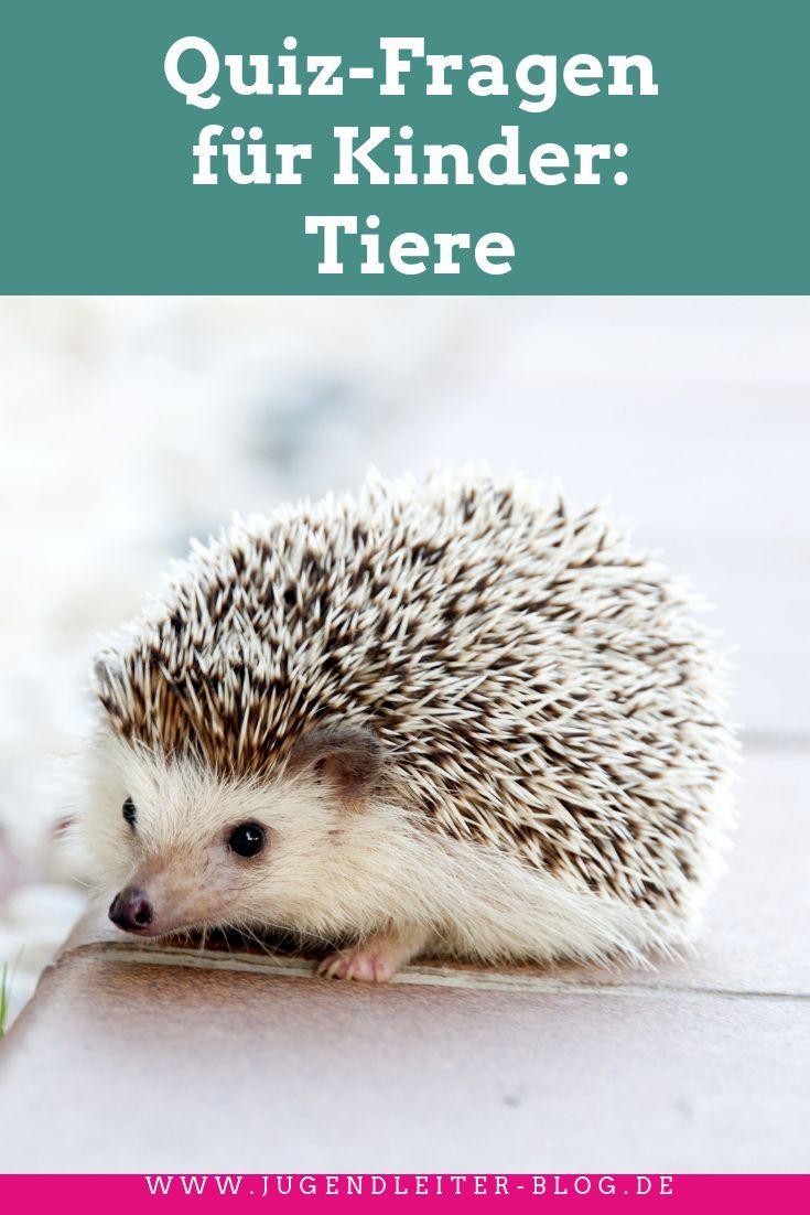 quizfragen für kinder tiere  kinder tiere quiz für