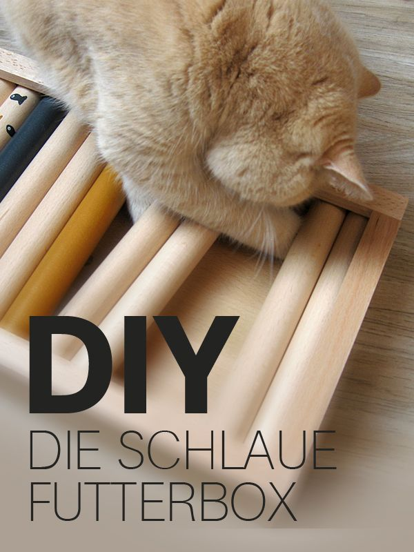 diy intelligenzspielzeug f r katzen die schlaue futterbox tierische bastelideen pinterest. Black Bedroom Furniture Sets. Home Design Ideas