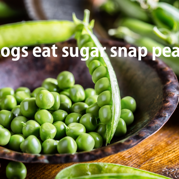 are sugar snap peas good for dogs