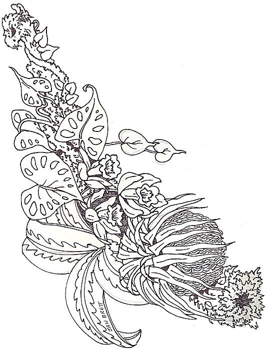 The Umbrella Coloring Mural Bromeliad