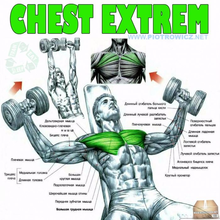 Chest Extrem Fly Dumbbell Exercise Hardcore Workout