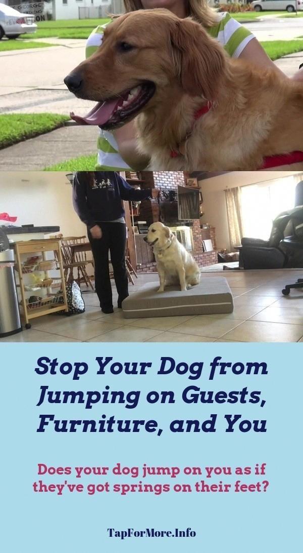 Stop Dog Jumping And Labrador Retriever Training Check The Pin