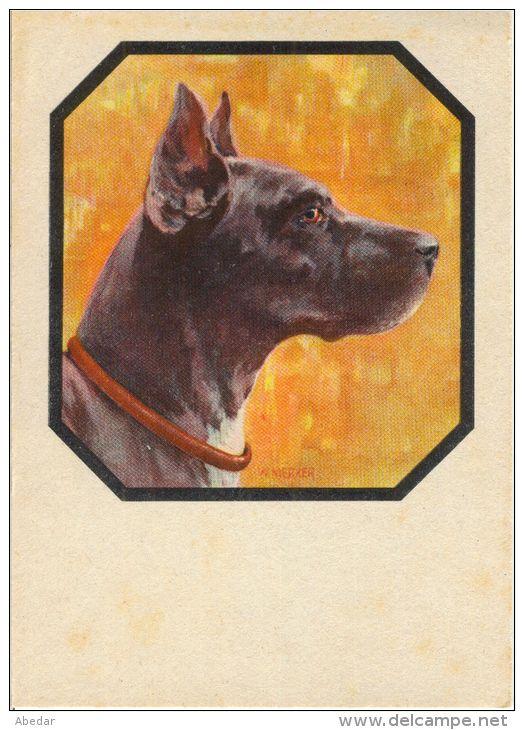 Great Dane Grand Danois Dogge Hunde, Cane Old Dog Postcard. cpa. - Delcampe.net