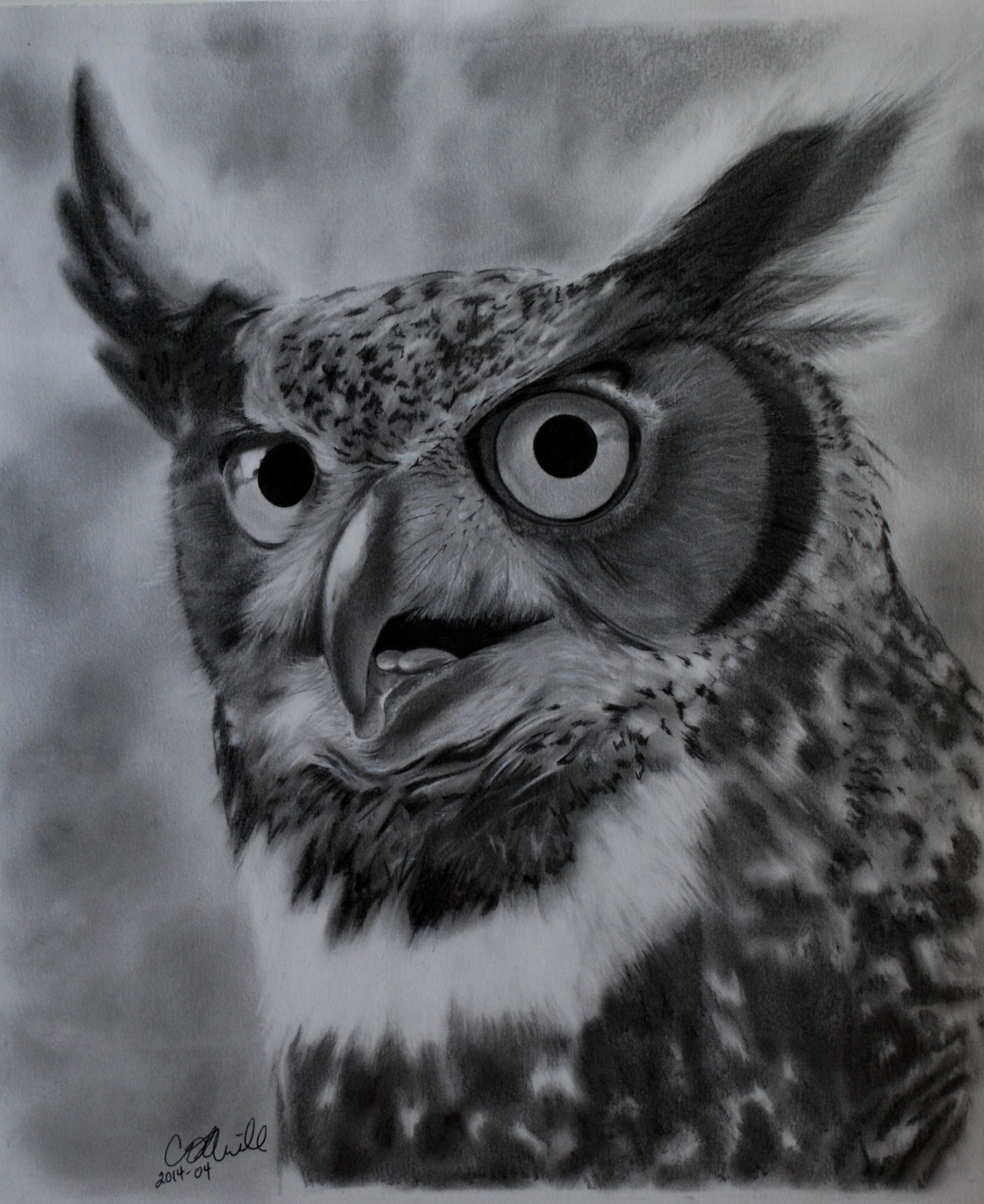 Black and white owl photography google search drawing classes