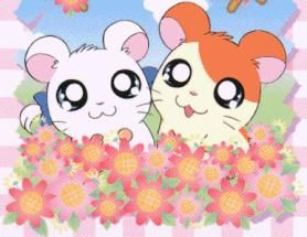 Hamtaro and Bijou pic