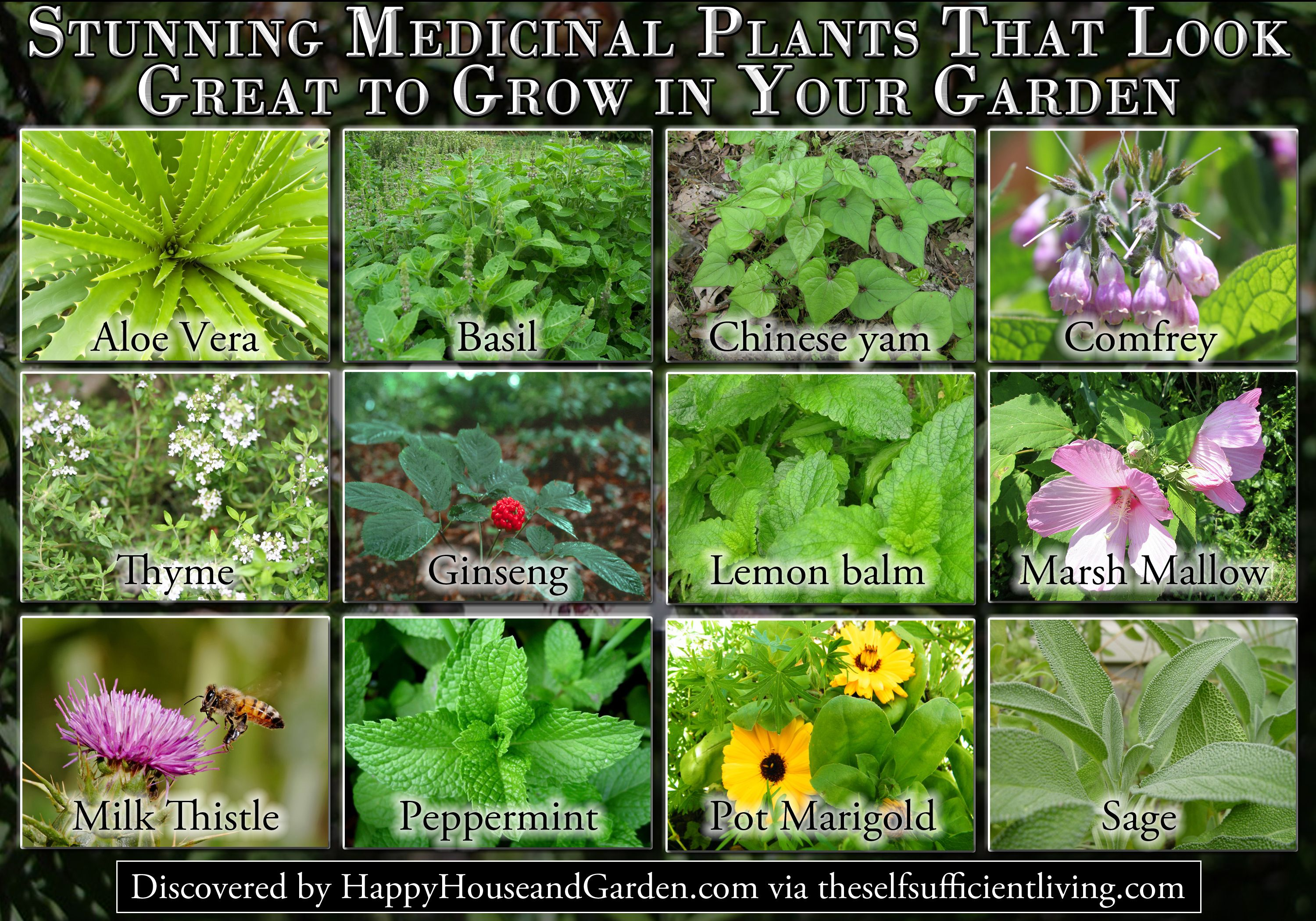 Stunning Medicinal Plants That Look Great To Grow In Your Garden Medicinal Plants Plants Garden