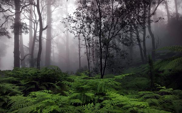Convectional Rainfall Jungle Wallpaper Forest Wallpaper Rain Pictures